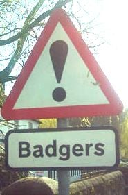 Warning: Badgers