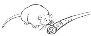 Thurber-esque cartoon of fat mouse looking inquisitively at a fibre optic cable