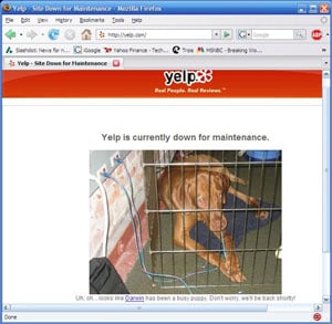 Picture of dog in a cage with an ethernet cable in his mouth