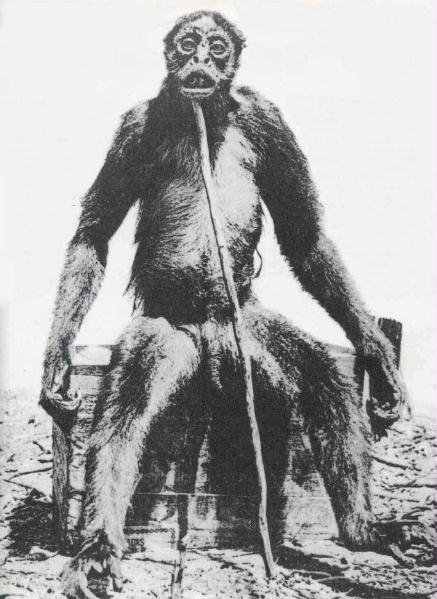 A picture of the supposed ape shot by de