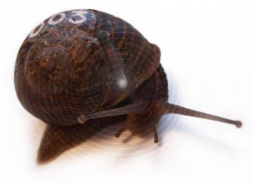 RFID_snail
