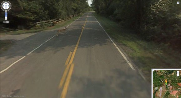 Deer runs out in front of Street View vehicle