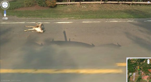 Deer takes a hit from Street View vehicle