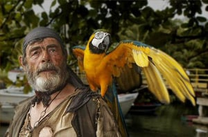 The parrot in a scene from Curse of the Black Pearl. Still: Walt Disney Pictures