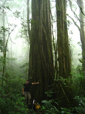 Tree sampling in the Monteverde cloud forest. Credit: Jorge Porra