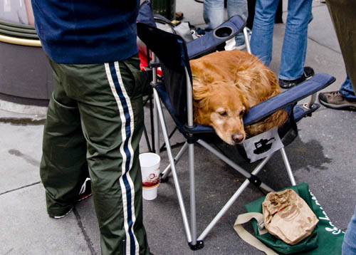 Dog in line at the Stockton Street store