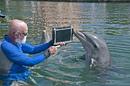 DolphinSpeak