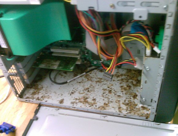 Mouse droppings inside PC case
