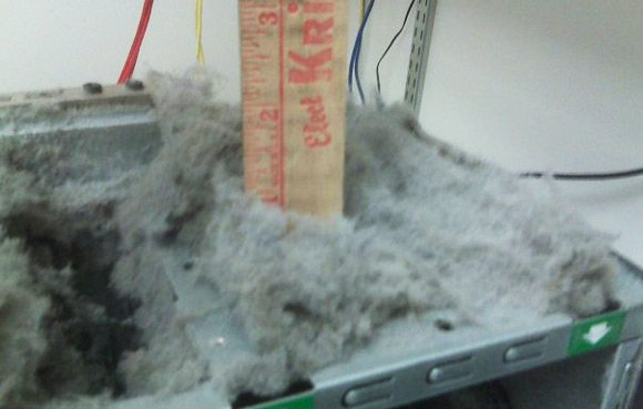 Ruler showing depth of fluff at one inch