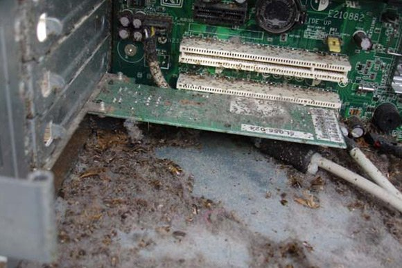 Another view of roaches inside PC