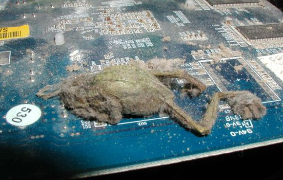 Mummified frog on video card