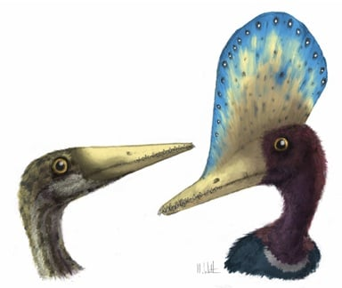 Sex related features of Darwinopterus. The male (right) has a large head crest, but this is absent in the female (left). Picture credit: Mark Witton