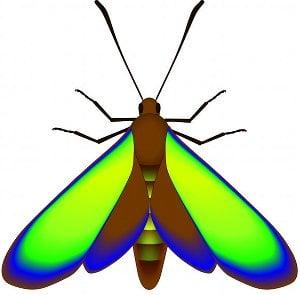 fossil_moth