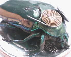 The piezoelectric beetle. Pic: The University of Michigan College of Engineering