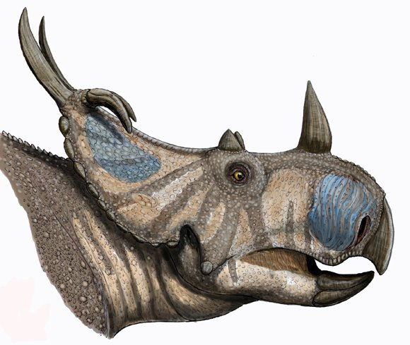 Artist's restoration of the head of Spinops sternbergorum