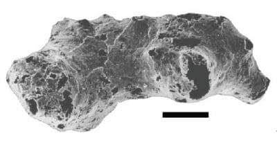 Otavia fossil example