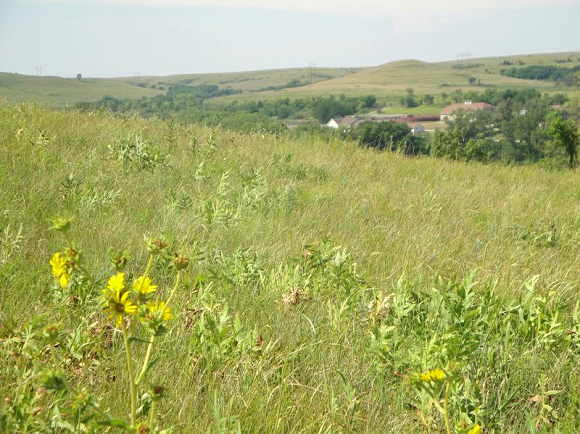 The rolling majesty of the Kansas prairies. Credit: NSF Konza Prairie LTER Site