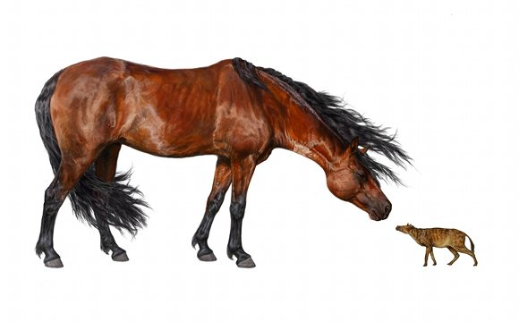 Modern Morgan horse (left) thinks about eating teeny Sifrhippus (right)