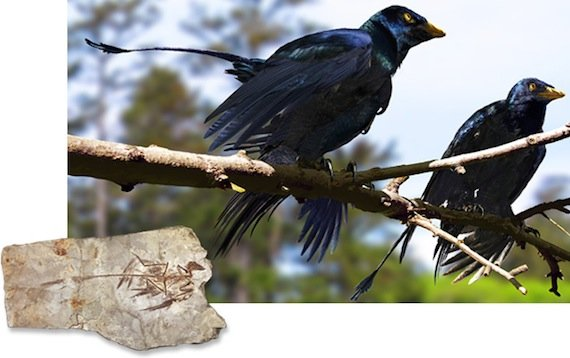 Microraptor, credit Jason Brougham/University of Texas; Mick Ellison (inset)