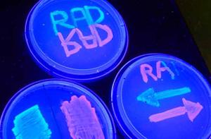 DNA fluorescing