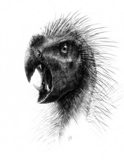 The Pegomastax africanus, Illustration by Todd Marshall, courtesy Universit