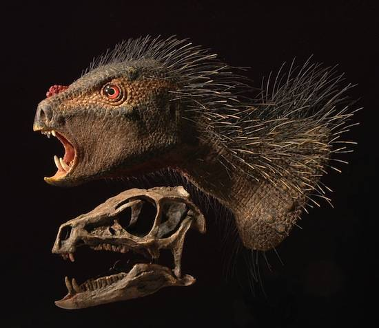 The Pegomastax africanus, courtesy University Chicago