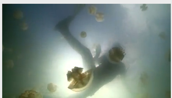 Brian Cox swimming with jellyfish in the video for the new Galaxy Song, credit screengrab BBC video