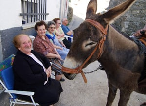 Donkeys and old timers in Los Narros