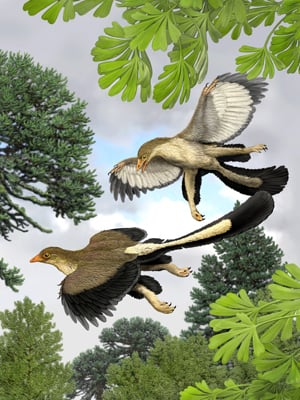 Artist's impression of the Archaeoteryx lithographica in flight