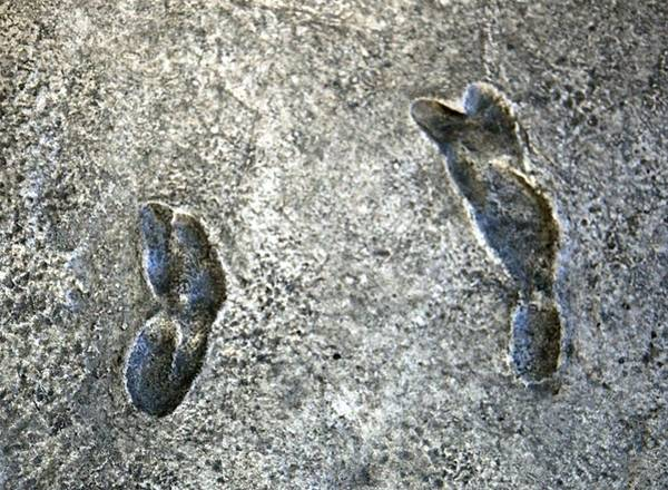 Laetoli footprints