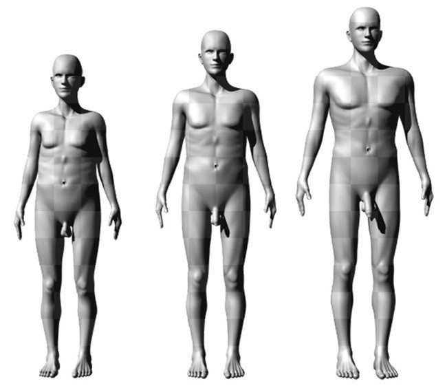 Male figures representing average (center) and extremes (left and right) in height, shoulder-to-hip ratio, and penis size. Pic: Brian Mautz