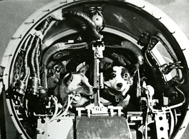Belka and Strelka seen inside the Vostok capsule