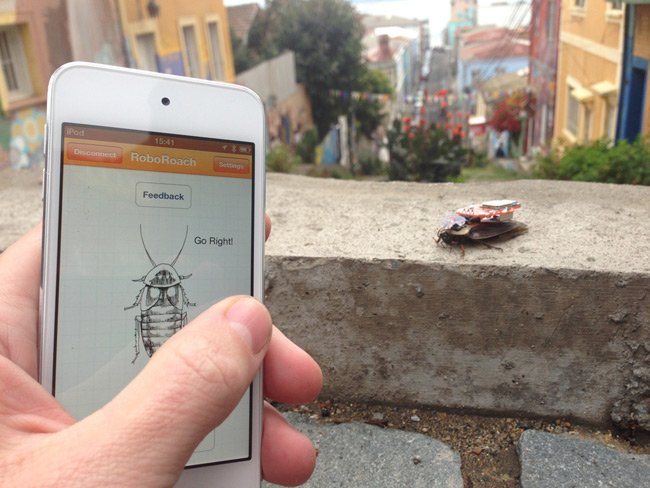 The RoboRoach seen being controlled by a mobile phone. Pic: Backyard Brains