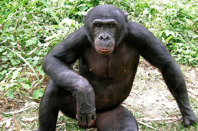 Bonobo Coffee