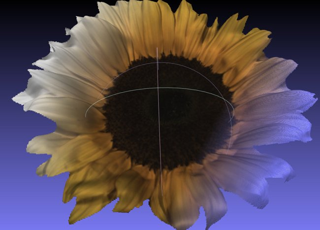 Sunflower scanned by the Fuel3D