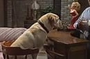 Bouncer the dog, from Neighbours