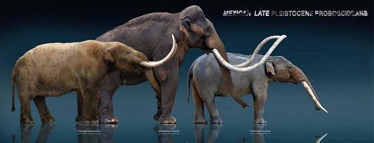 From left to right: Mastodon, mammoth, gomphothere. Credit: Sergio de la Rosa