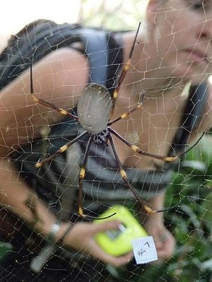 Liz Lowe with Golden Orb-Weaver