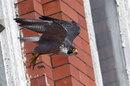 shutterstock_209016412-faclon