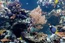 NHM Coral Reef Aquarium
