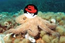 Octopus_Red_Hat