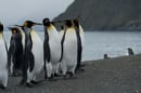 Penguins, image via Shuttertock