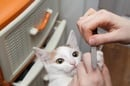 A cat has her nails filed by her owner. Pic by Shutterstock