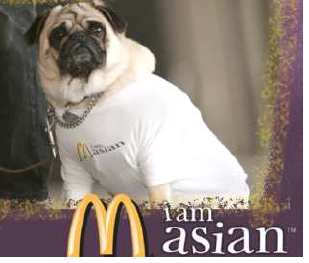 Picture of a pug with a I am Asian shirt on