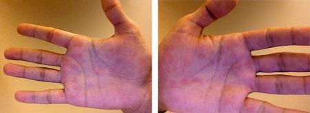 alfredo melloni's pink palms - images courtesy alfredo melloni