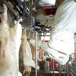 The automated pig-gutting system