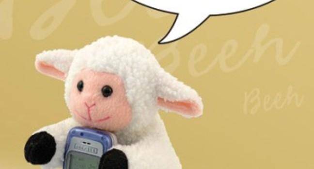 Sheep and mobile phone