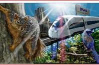 Train racing through forrest in city with squirrel near buy and a Dell ad in the background