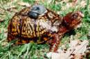 GPS_turtle_SM