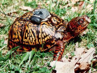 GPS_turtle_SMALL